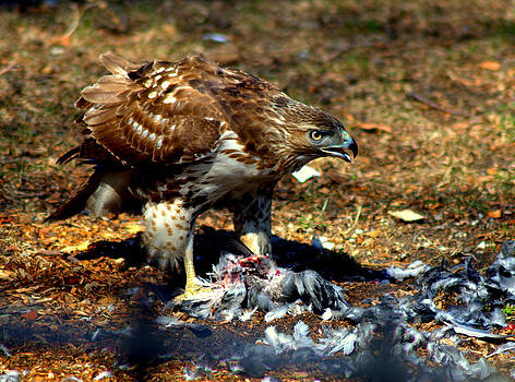 Hawk Attack by Luis Baez