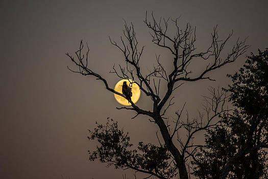 Hawk in the Moon by Dean Chytraus