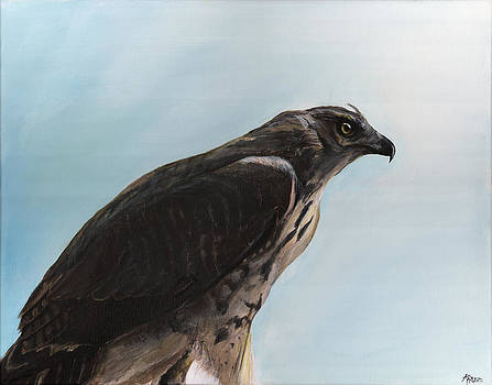 Hawk by James Kruse