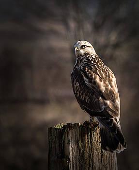 Randy Hall - Hawk On A Post