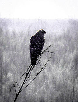 Christy Usilton - Hawks Foggy Morning