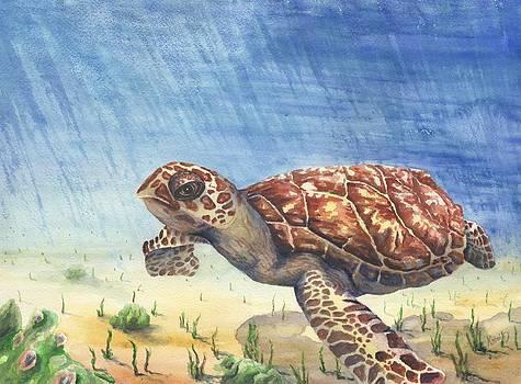 Hawksbill Sea Turtle by Oty Kocsis