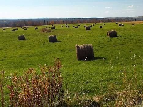 Hay Bales by Gene Cyr