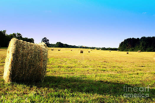 Hay Field by Jinx Farmer