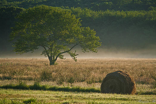 Hay in Sunshine by Ranjana Pai