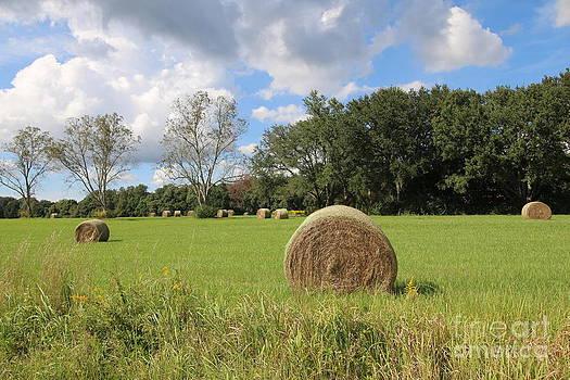 Hay Roll in Field  by Light Rapture