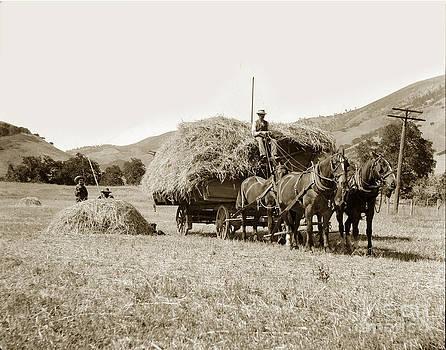 California Views Mr Pat Hathaway Archives - Horse-drawn Hay Wagon Carmel Valley California circa 1905
