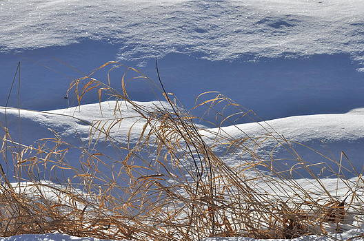 Hayfield in Winter by Gerald Hiam