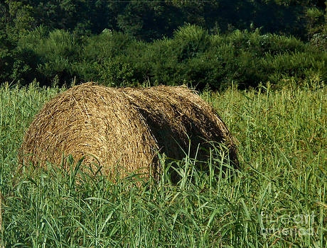 Haylage by Eva Thomas