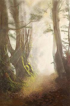 Angela A Stanton - Hazy Fall Forest Light