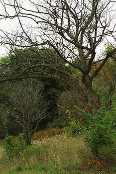 Hazy Forest No.1 by Carla Pivonski