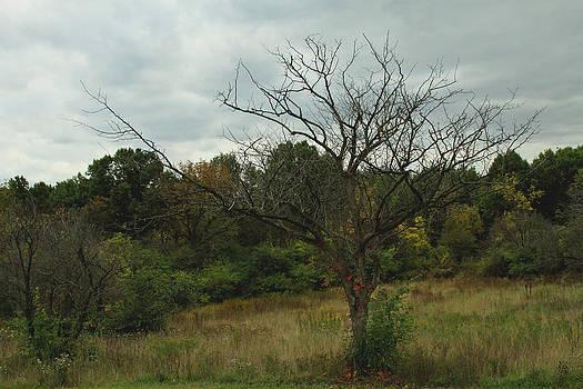 Hazy Forest No.3 by Carla Pivonski