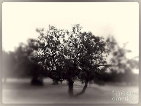 Hazy Tree by Jeremy Linot