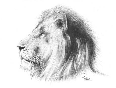 Head of a Lion by Dave Lawson