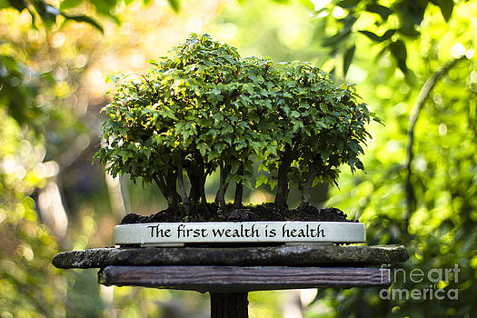 Beverly Claire Kaiya - Health is Wealth Bonsai Trees