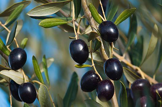 Healthy fresh  olives by Jawaharlal Layachi