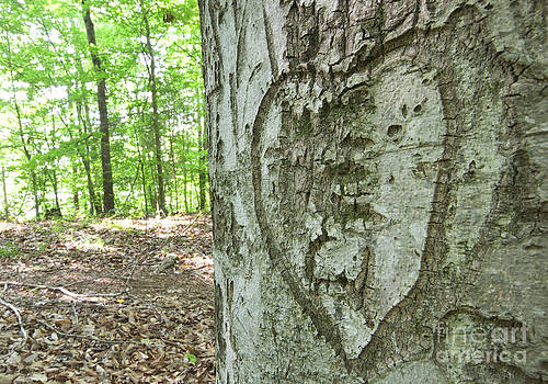 Jonathan Welch - Heart Carved into a Tree