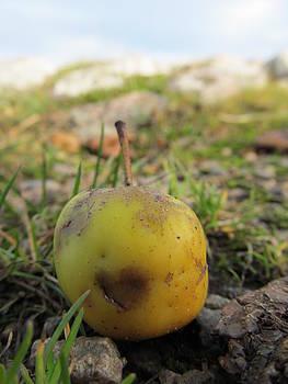 Heart in an apple by Chepcher Jones