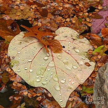 Heart Leaf  by Anita Adams
