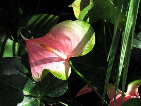 Heart Me Flower by Dianne Furphy