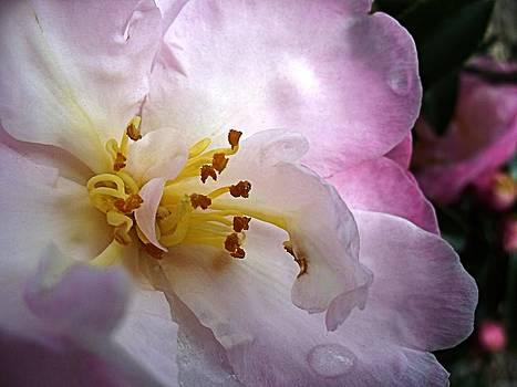 David Rich - Heart of a Flower