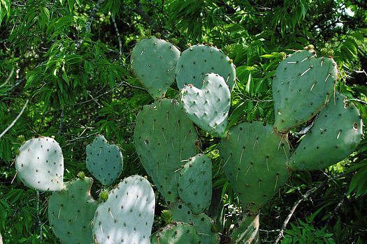 Heart of the Cactus by Laurie Poetschke
