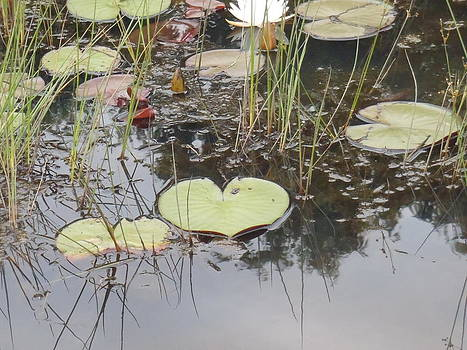Heart of the Lily by Lorrie M Nelson