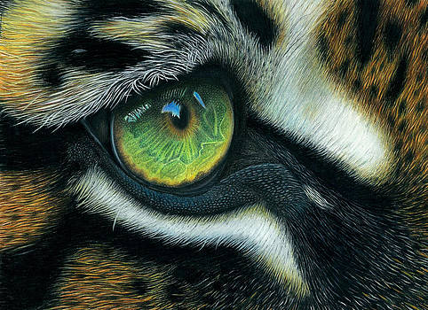 Heart of the Tiger by Karen Sharp