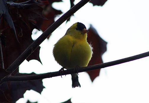 Kathy J Snow - Heart of the Yellow Bird