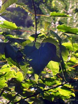 Heart Shadow of a leaf by Jen Seel