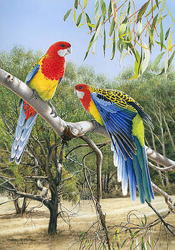 Heatwave - Eastern Rosellas by Frances McMahon