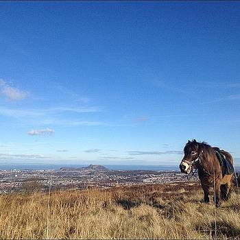 Heaven...? #pony #exmoor #scotland by Ashley Millette