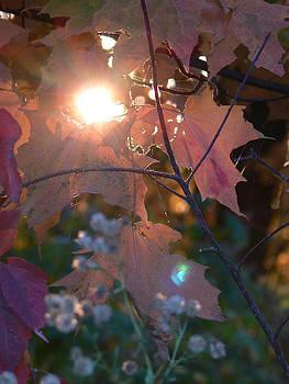 Heavenly Light by Natalie LaRocque