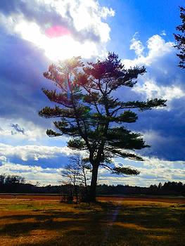 Heavenly Tree by Heather Sylvia