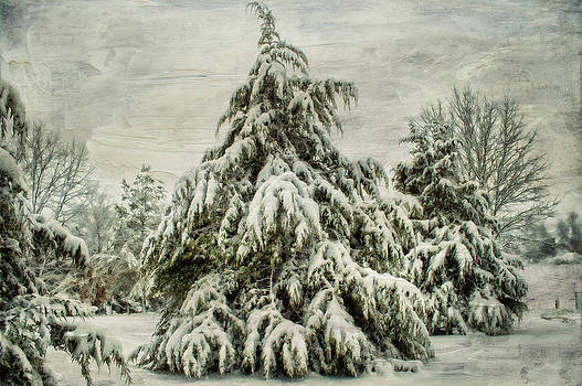Heavy Snow by Kathy Jennings