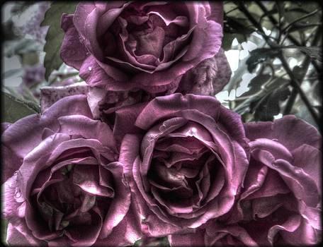 Heirloom Roses  by Deborah Knolle