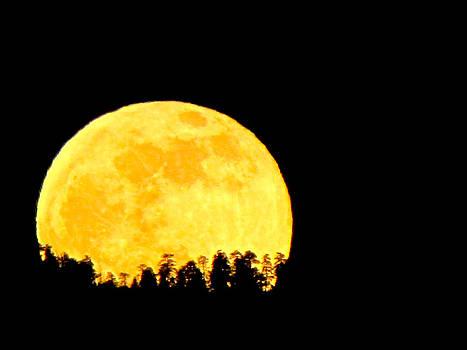 Hello Moon by Feva  Fotos