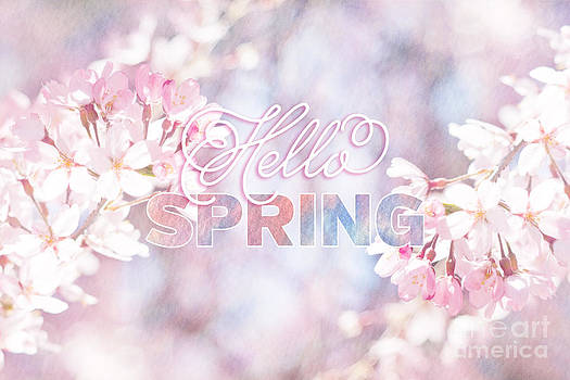 Beverly Claire Kaiya - Hello Spring Sakura Cherry Blossoms Watercolor Background