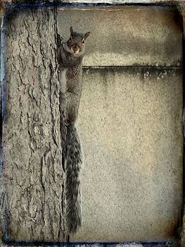 Gothicrow Images - Hello Squirrel