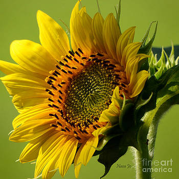 Hello Sunshine by Nava Thompson