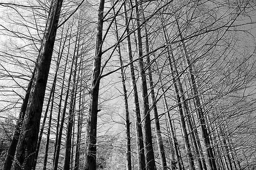Phoresto Kim - Hello Trees