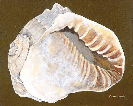 Helmet Conch by Diane Nations