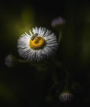 Help Each Other by Paul Barson