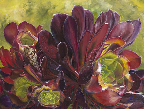 Hens and Chicks by Maria Gibbs