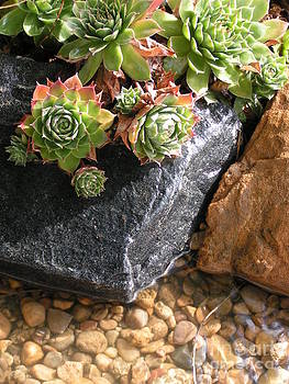 Hens and Chicks Succulents by Tracy L Teeter