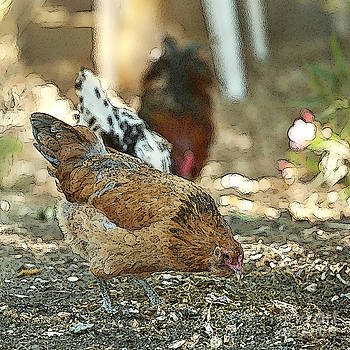 Artist and Photographer Laura Wrede - Hens Scratching Around