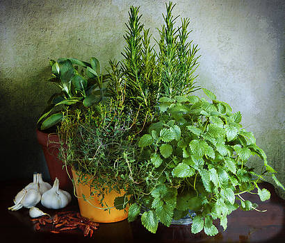 Herbs and spices fresh and dry by Luisa Vallon Fumi