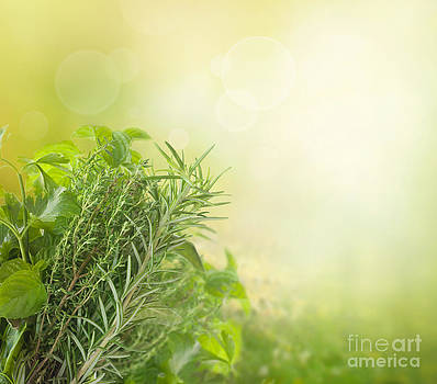Mythja  Photography - Herbs with copyspace