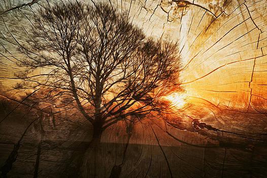 Herbstlichezeit  by Barbelotta