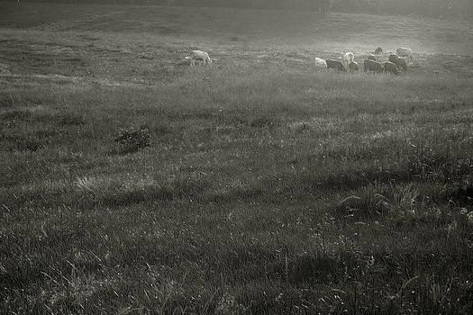 Nina Fosdick - Herd